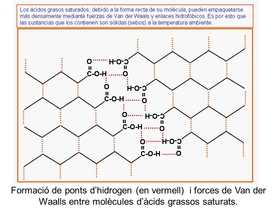 b Formació de ponts dhidrogen (en vermell) i forces de Van der Waalls entre molècules dàcids grassos saturats.