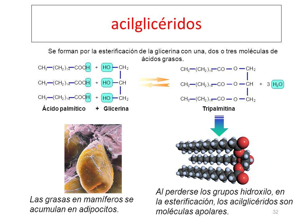 acilglicéridos 32 COOH(CH 2 ) 14 CH 3 COOH(CH 2 ) 14 CH 3 COOH(CH 2 ) 14 CH 3 CH 2 2 HO + + + + 3 H 2 O CO(CH 2 ) 14 CH 3 CO(CH 2 ) 14 CH 3 CO(CH 2 )