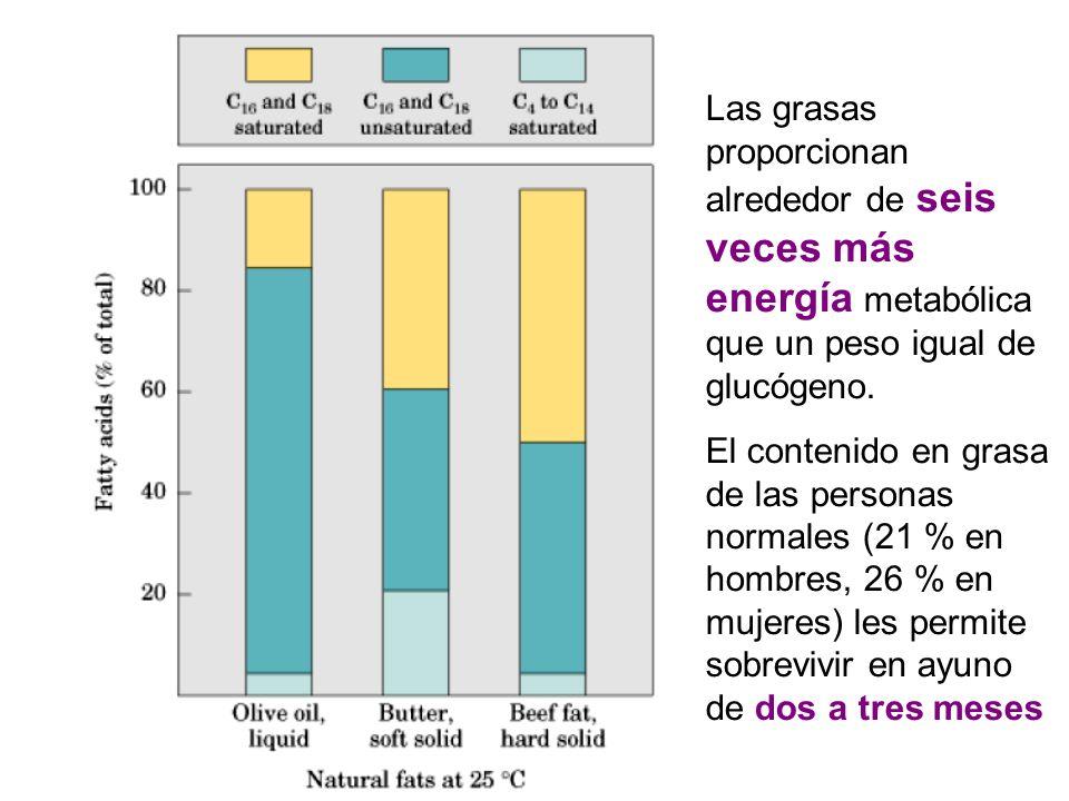 Las grasas proporcionan alrededor de seis veces más energía metabólica que un peso igual de glucógeno. El contenido en grasa de las personas normales