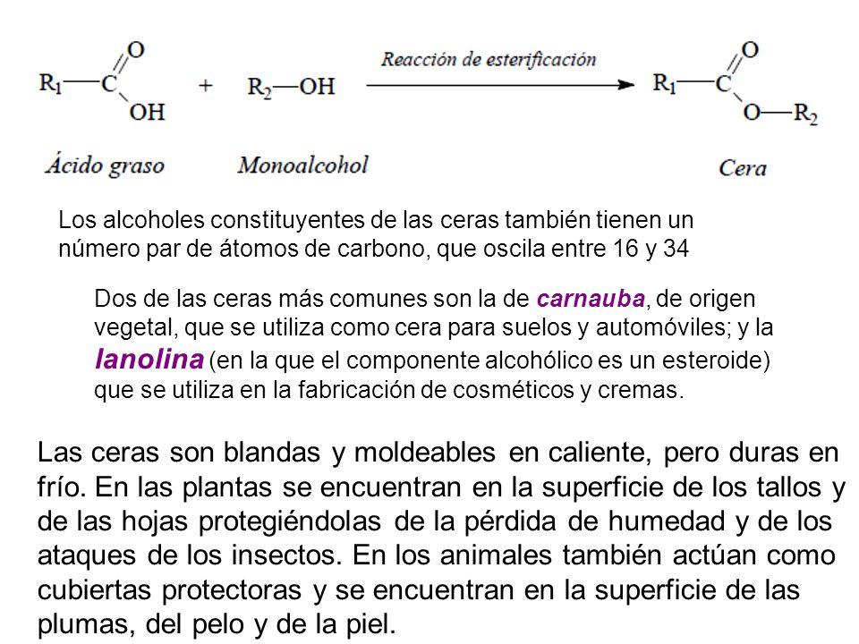 Los alcoholes constituyentes de las ceras también tienen un número par de átomos de carbono, que oscila entre 16 y 34 Dos de las ceras más comunes son