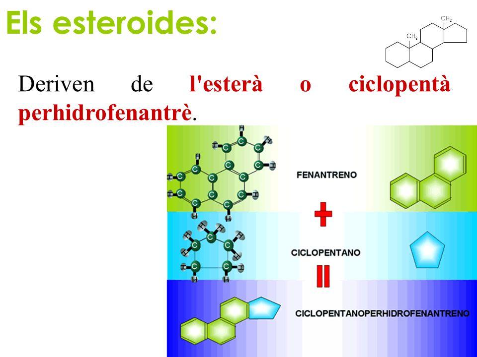 CH 3 Els esteroides: Deriven de l'esterà o ciclopentà perhidrofenantrè.