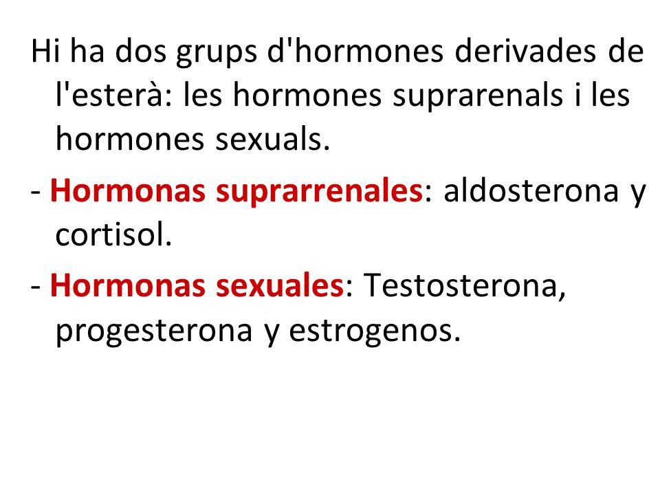 Hi ha dos grups d'hormones derivades de l'esterà: les hormones suprarenals i les hormones sexuals. - Hormonas suprarrenales: aldosterona y cortisol. -