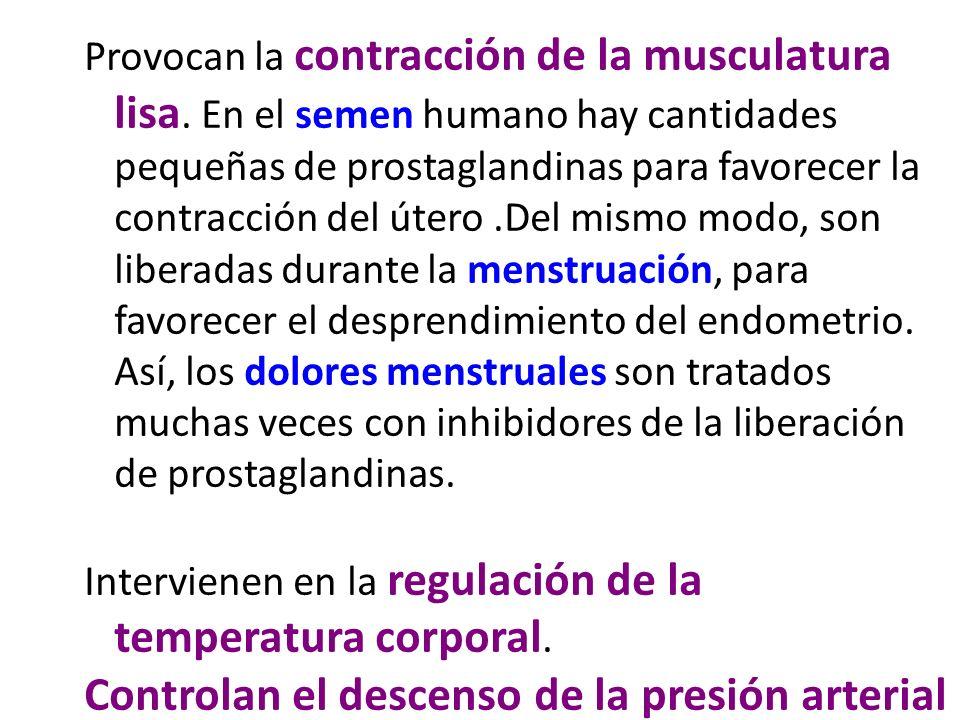 Provocan la contracción de la musculatura lisa. En el semen humano hay cantidades pequeñas de prostaglandinas para favorecer la contracción del útero.