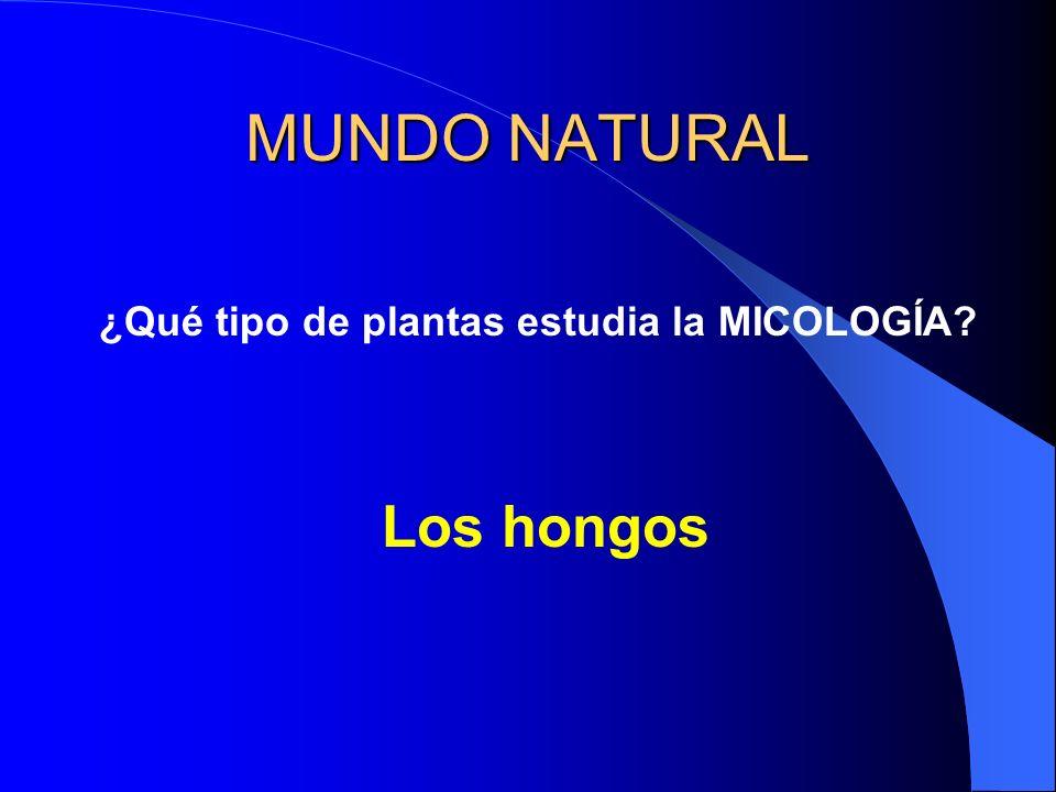 MUNDO NATURAL ¿Qué tipo de plantas estudia la MICOLOGÍA? Los hongos