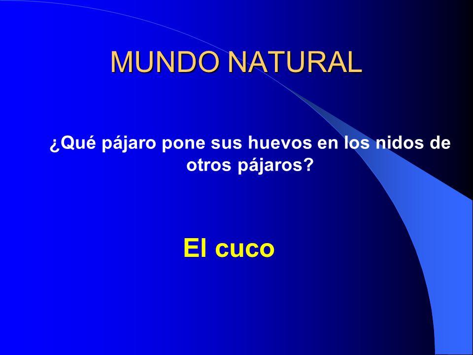 MUNDO NATURAL ¿Qué pájaro pone sus huevos en los nidos de otros pájaros? El cuco