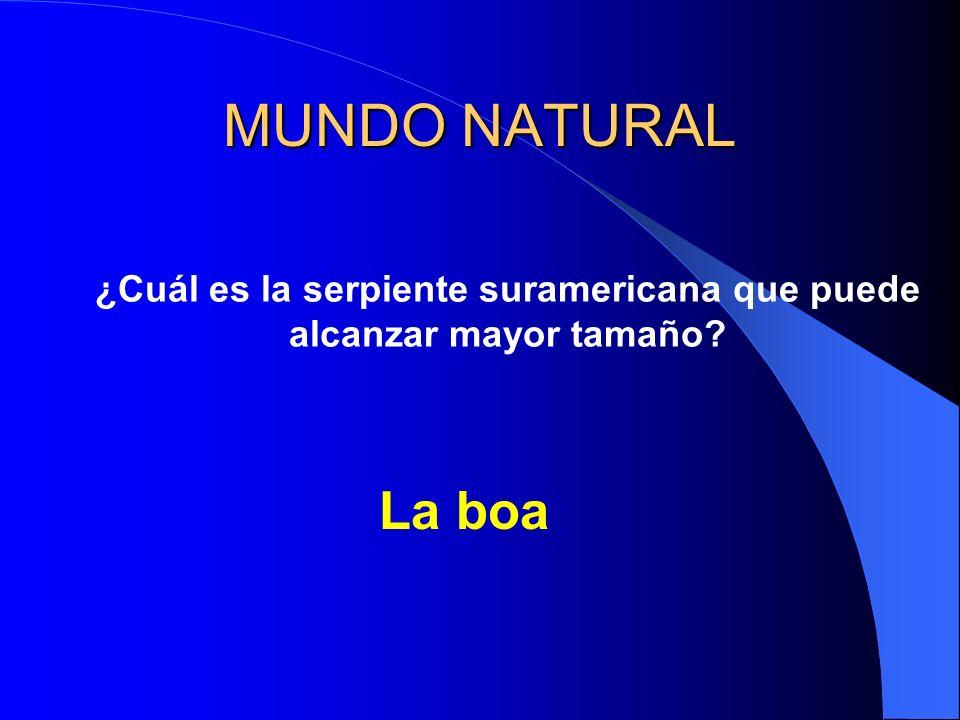 MUNDO NATURAL ¿Cuál es la serpiente suramericana que puede alcanzar mayor tamaño? La boa