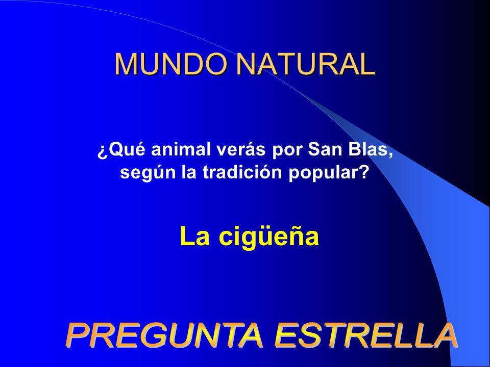 MUNDO NATURAL ¿Qué animal verás por San Blas, según la tradición popular? La cigüeña