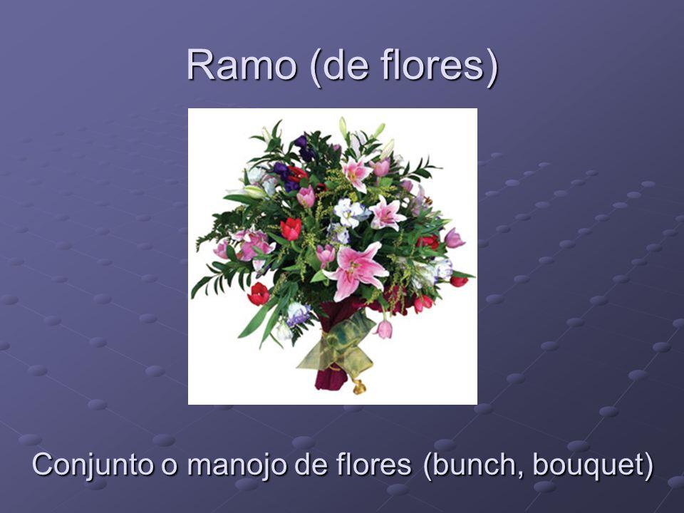 Ramo (de flores) Conjunto o manojo de flores (bunch, bouquet)