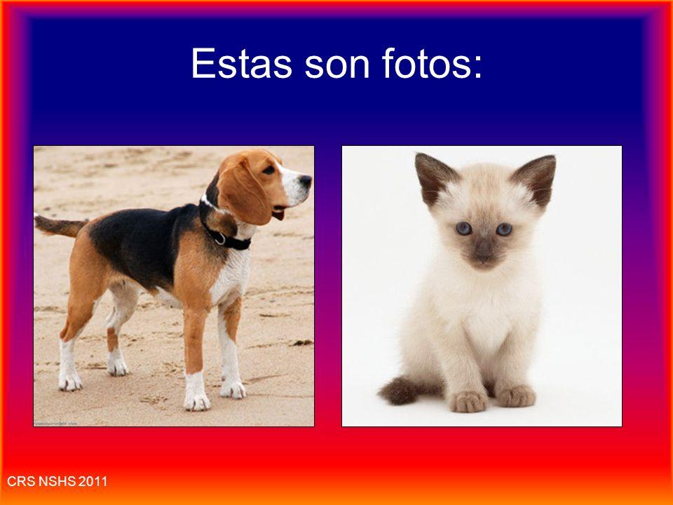 CRS NSHS 2011 El gato