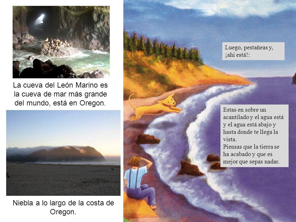 La cueva del León Marino es la cueva de mar más grande del mundo, está en Oregon. Niebla a lo largo de la costa de Oregon. Estas en sobre un acantilad