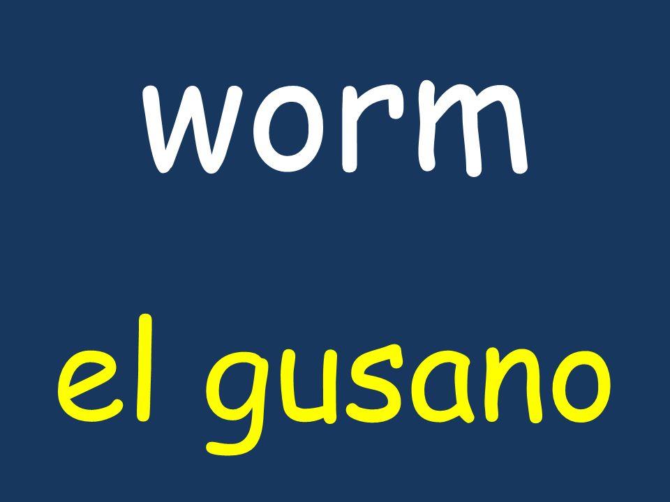 worm el gusano