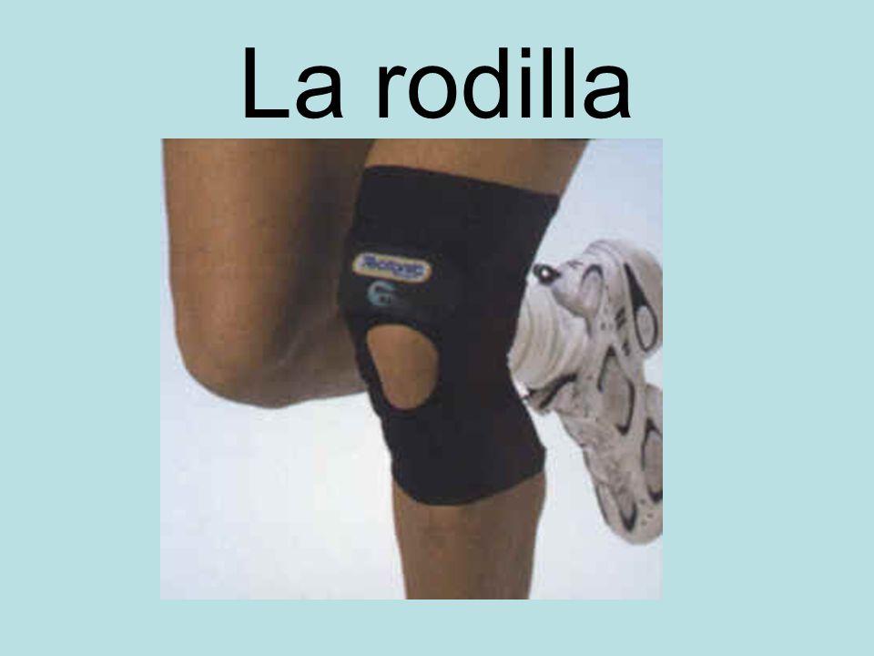 La rodilla