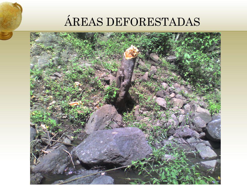 ÁREAS DEFORESTADAS