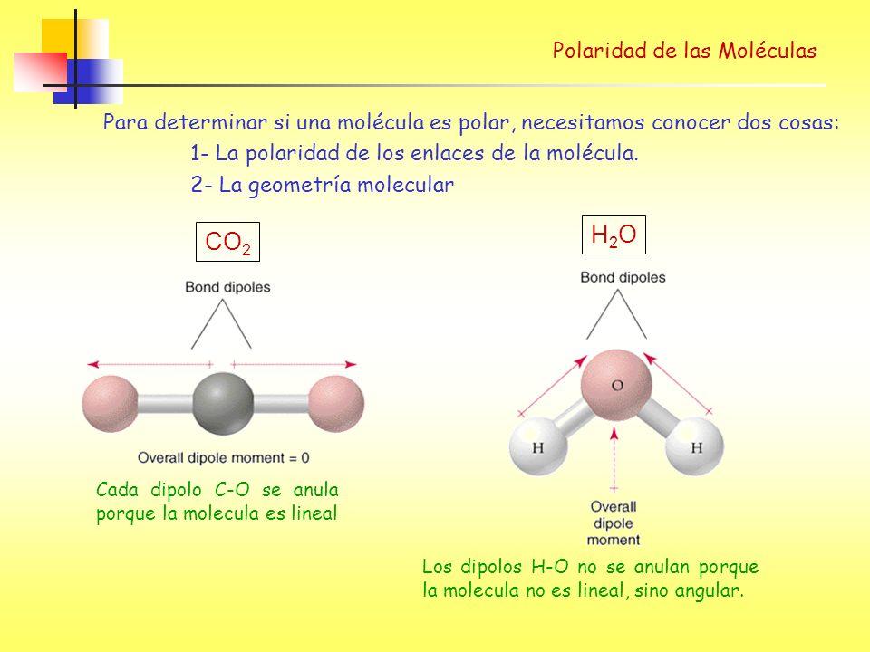 Para determinar si una molécula es polar, necesitamos conocer dos cosas: 1- La polaridad de los enlaces de la molécula.