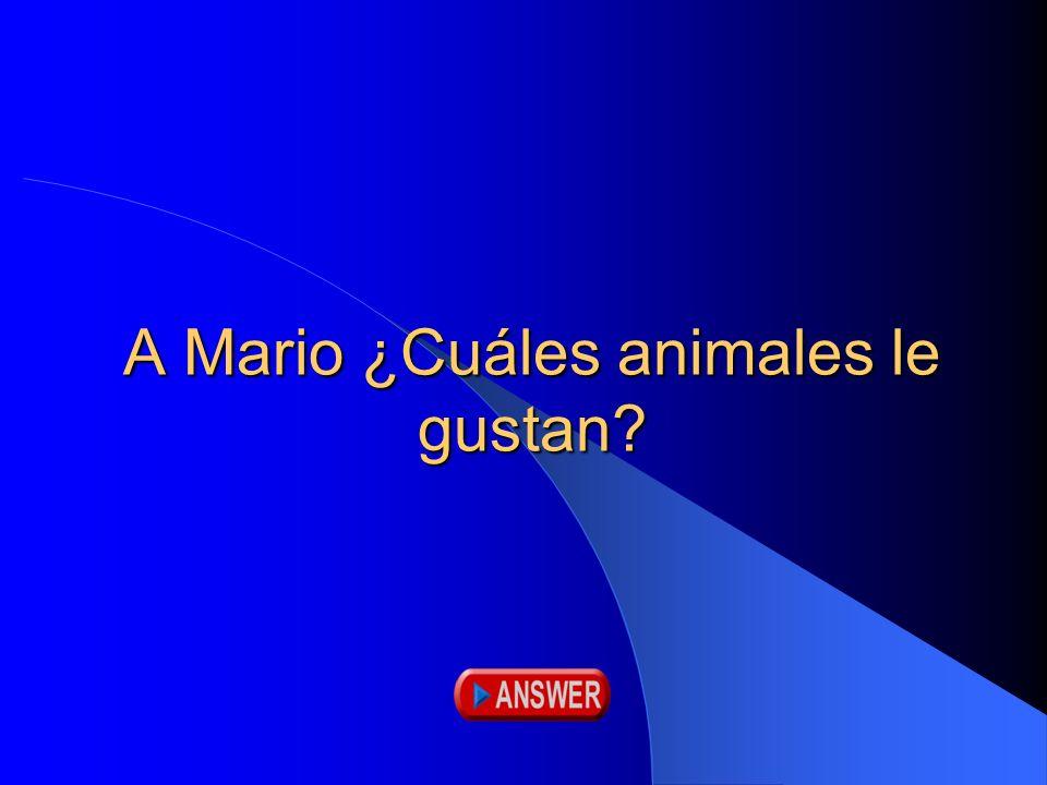 A Mario ¿Cuáles animales le gustan?