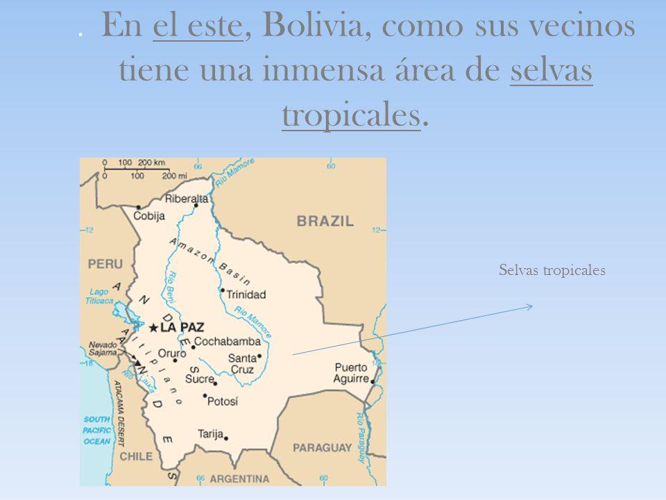 . En el este, Bolivia, como sus vecinos tiene una inmensa área de selvas tropicales. Selvas tropicales