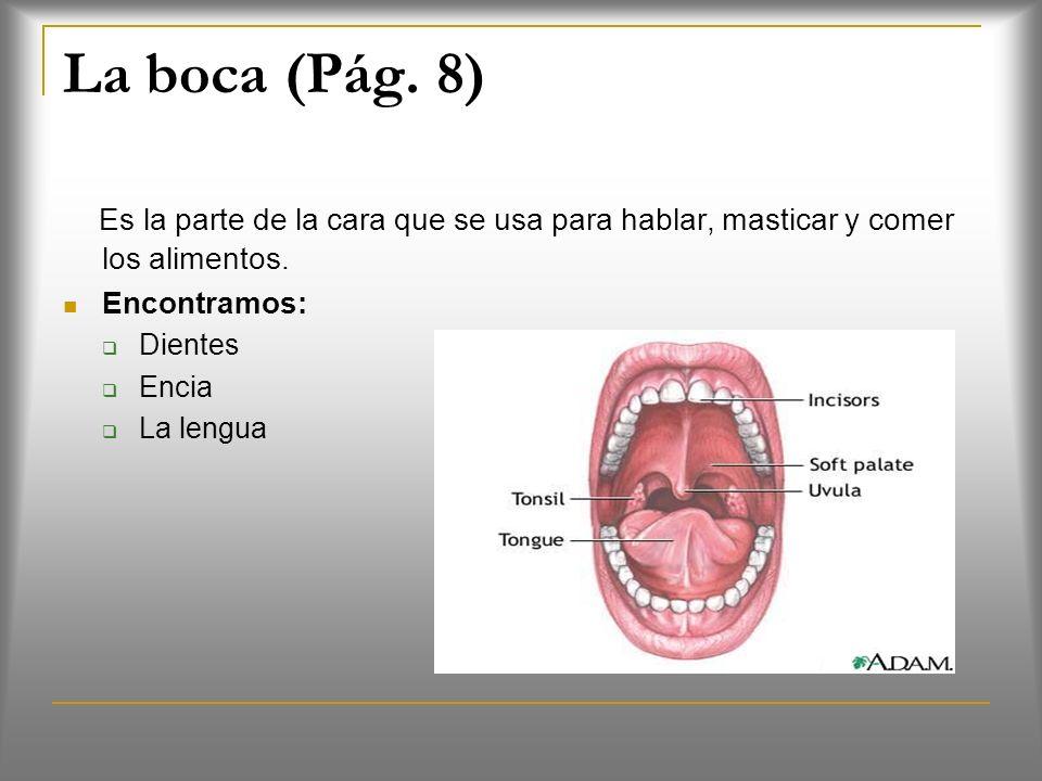 La boca (Pág.8) Es la parte de la cara que se usa para hablar, masticar y comer los alimentos.