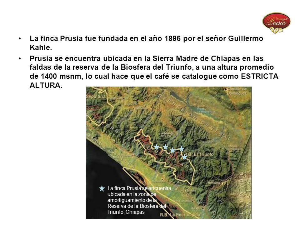 La finca Prusia fue fundada en el año 1896 por el señor Guillermo Kahle. Prusia se encuentra ubicada en la Sierra Madre de Chiapas en las faldas de la
