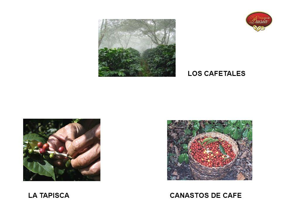 LOS CAFETALES LA TAPISCACANASTOS DE CAFE