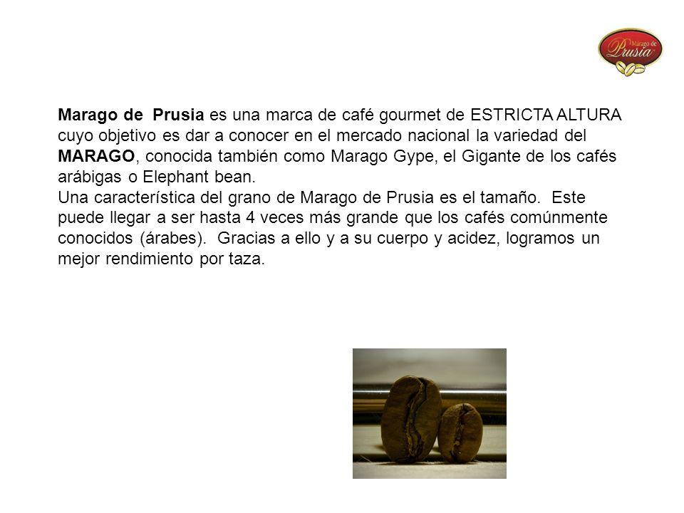 Marago de Prusia es una marca de café gourmet de ESTRICTA ALTURA cuyo objetivo es dar a conocer en el mercado nacional la variedad del MARAGO, conocid