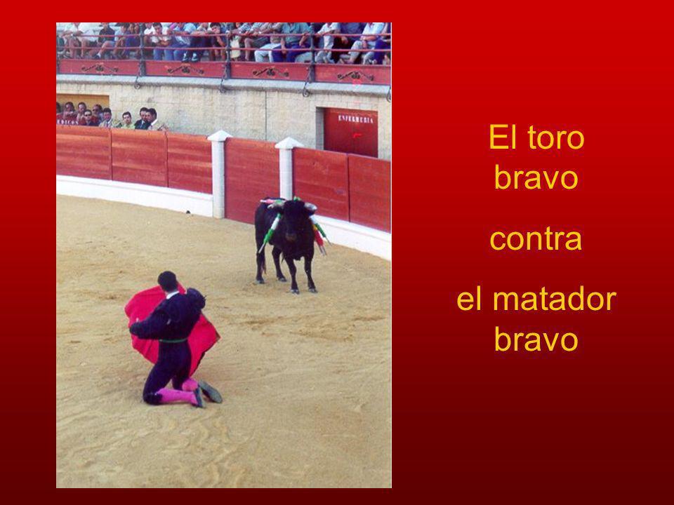 El toro bravo contra el matador bravo