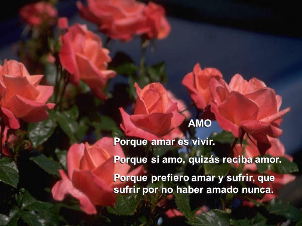 AMO Porque amar es vivir.Porque si amo, quizás reciba amor.