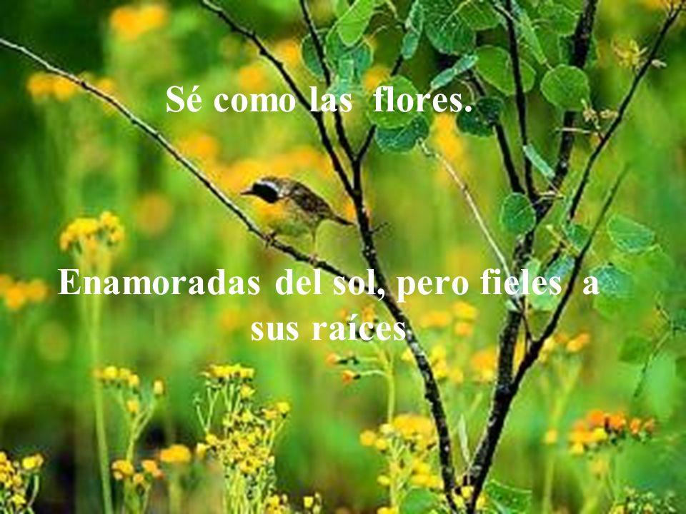 Sé como las flores. Enamoradas del sol, pero fieles a sus raíces