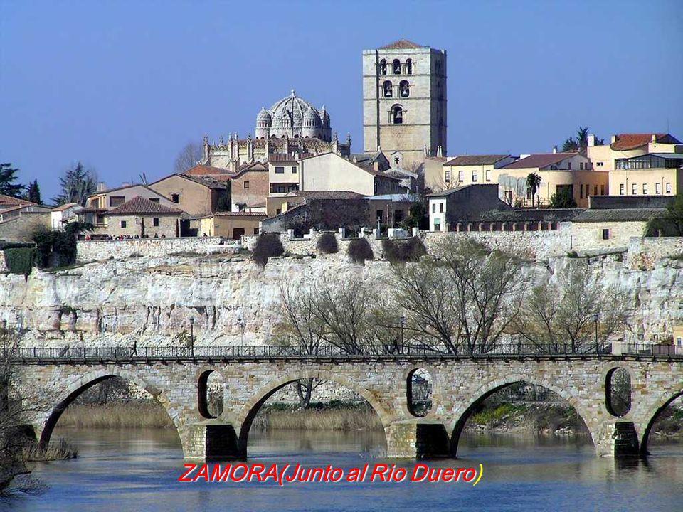 ZAMORA(Junto al Rio Duero ZAMORA(Junto al Rio Duero)