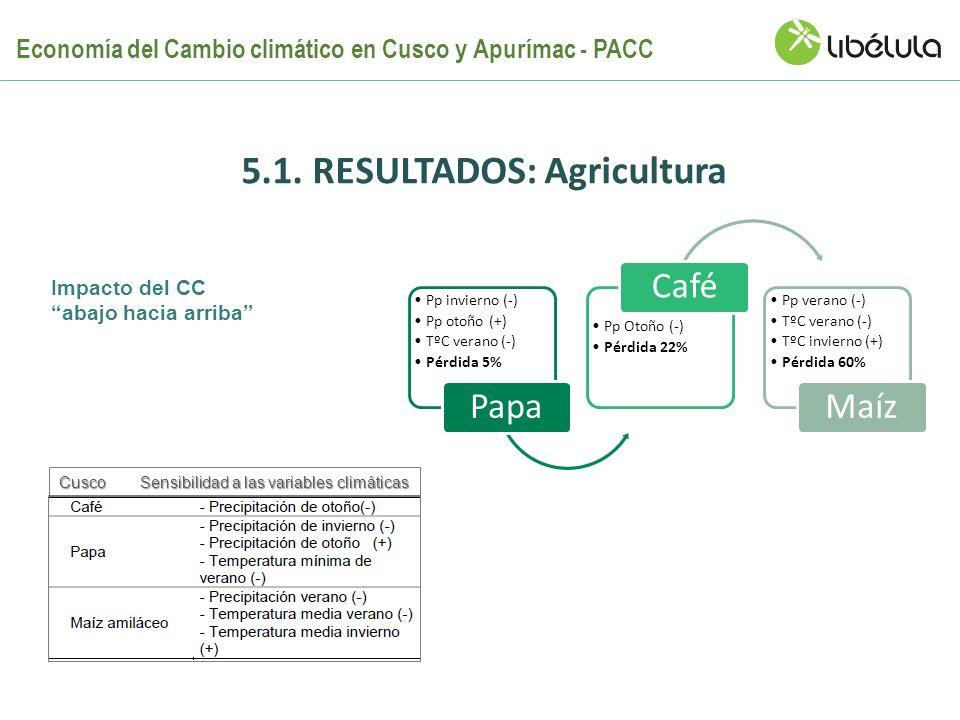 5.1. RESULTADOS: Agricultura Pp invierno (-) Pp otoño (+) TºC verano (-) Pérdida 5% Papa Pp Otoño (-) Pérdida 22% Café Pp verano (-) TºC verano (-) Tº