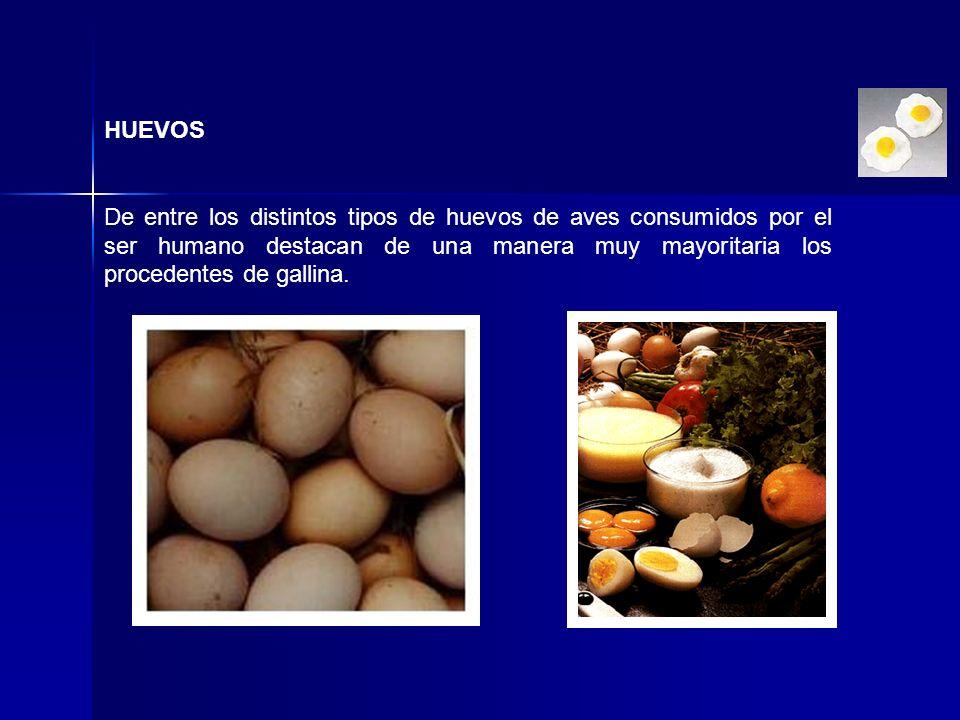 HUEVOS De entre los distintos tipos de huevos de aves consumidos por el ser humano destacan de una manera muy mayoritaria los procedentes de gallina.
