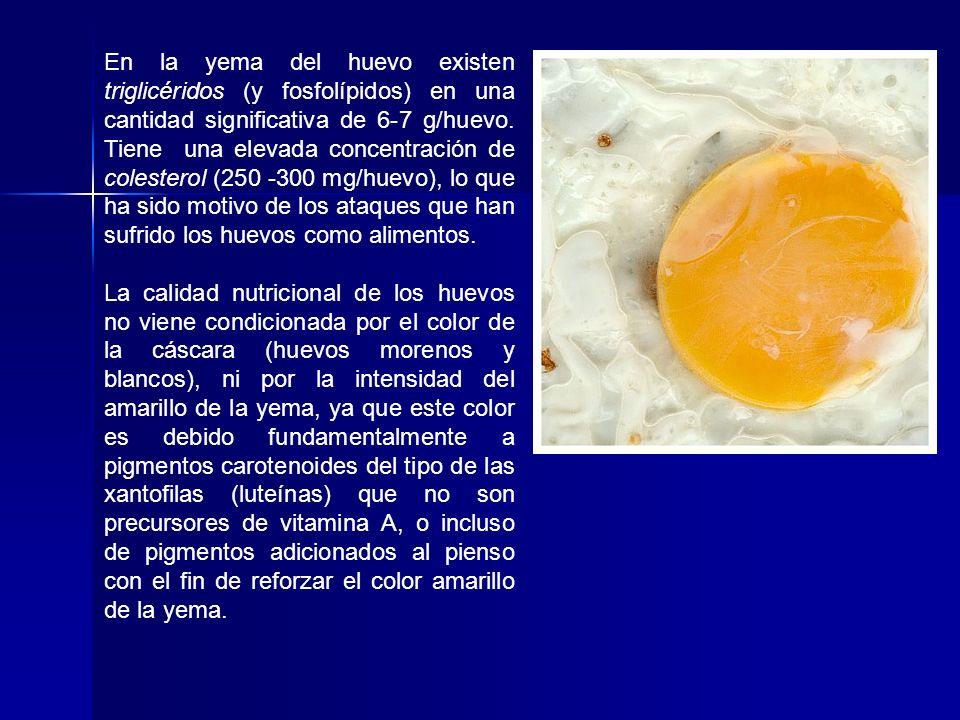 En la yema del huevo existen triglicéridos (y fosfolípidos) en una cantidad significativa de 6-7 g/huevo. Tiene una elevada concentración de colestero