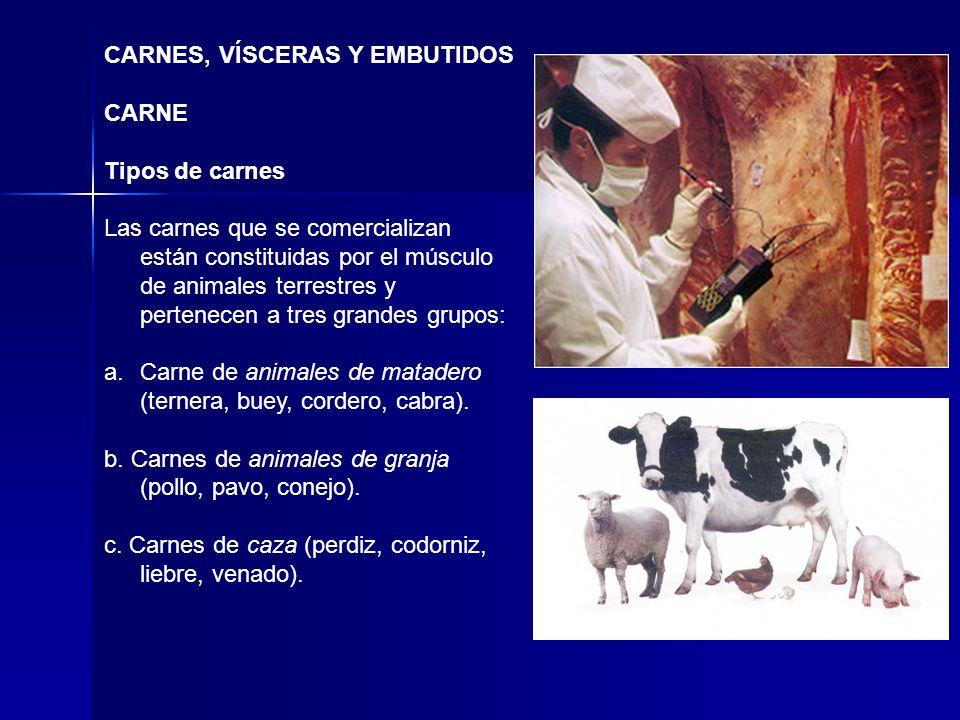 CARNES, VÍSCERAS Y EMBUTIDOS CARNE Tipos de carnes Las carnes que se comercializan están constituidas por el músculo de animales terrestres y pertenec