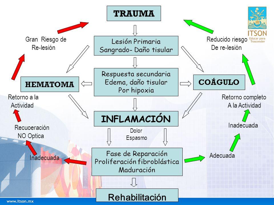 TRAUMA Lesión Primaria Sangrado- Daño tisular Respuesta secundaria Edema, daño tisular Por hipoxia INFLAMACIÓN Fase de Reparación Proliferación fibrob