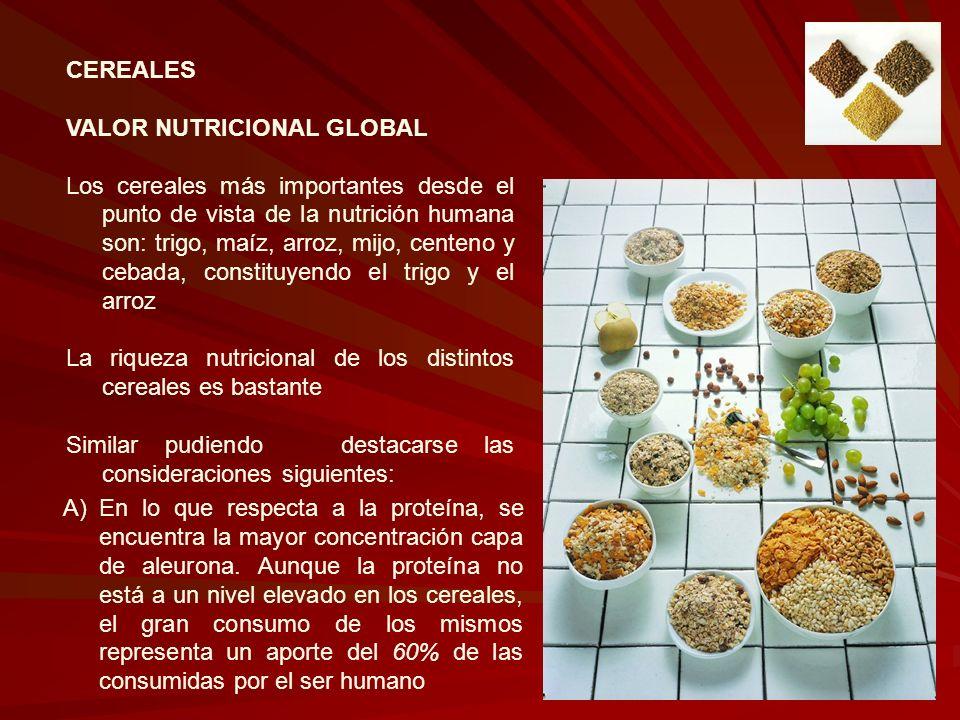 CEREALES VALOR NUTRICIONAL GLOBAL Los cereales más importantes desde el punto de vista de la nutrición humana son: trigo, maíz, arroz, mijo, centeno y