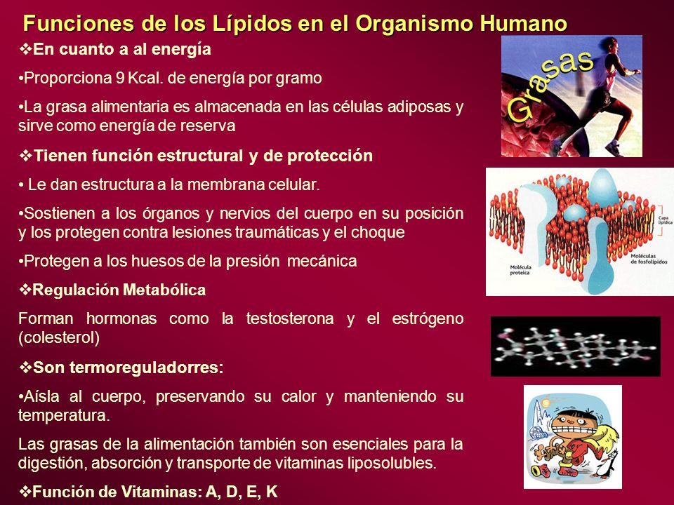 Funciones de los Lípidos en el Organismo Humano En cuanto a al energía Proporciona 9 Kcal. de energía por gramo La grasa alimentaria es almacenada en