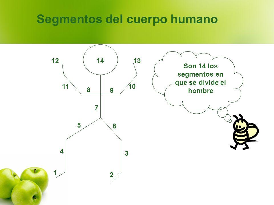 Segmentos del cuerpo humano 1 4 2 3 6 5 7 8 11 12 9 10 13 14 Son 14 los segmentos en que se divide el hombre