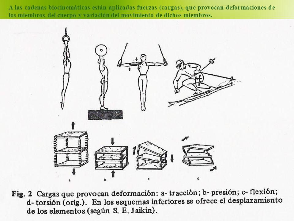 A las cadenas biocinemáticas están aplicadas fuerzas (cargas), que provocan deformaciones de los miembros del cuerpo y variación del movimiento de dic