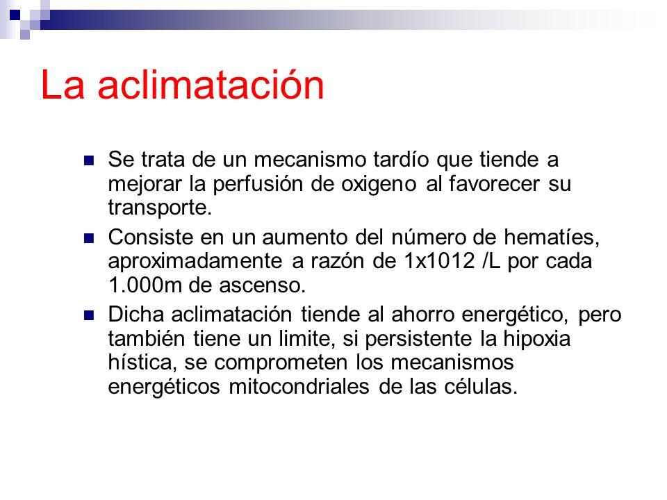 La aclimatación Se trata de un mecanismo tardío que tiende a mejorar la perfusión de oxigeno al favorecer su transporte. Consiste en un aumento del nú