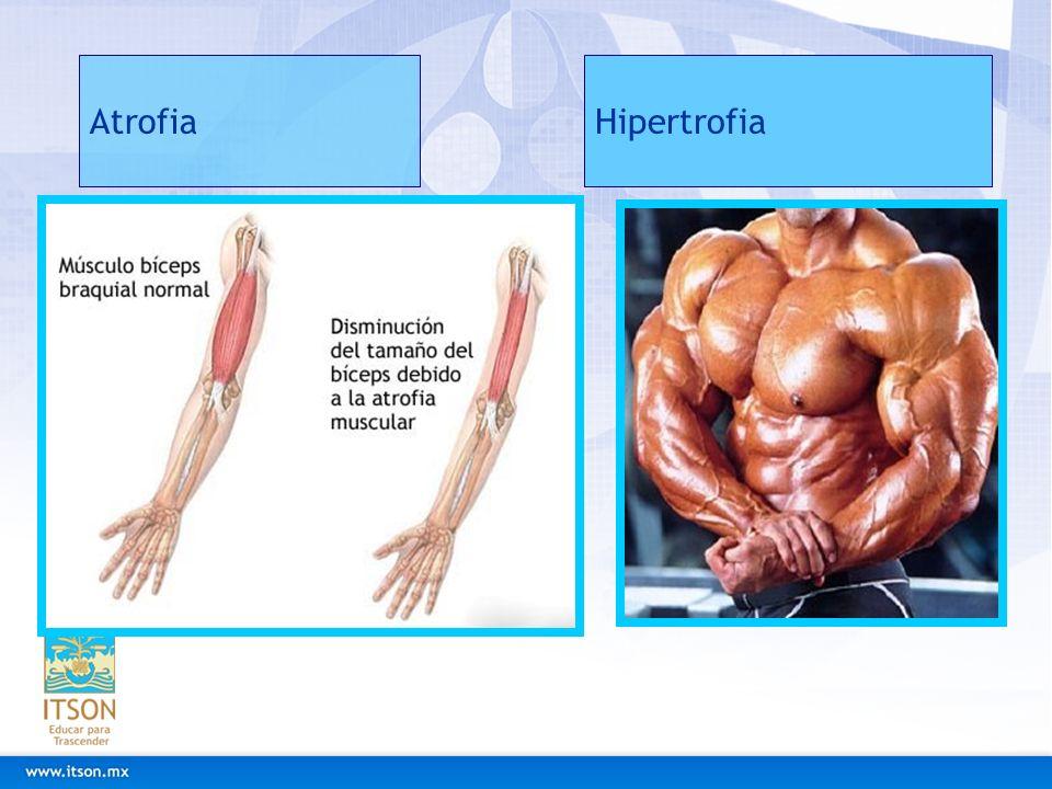 AtrofiaHipertrofia