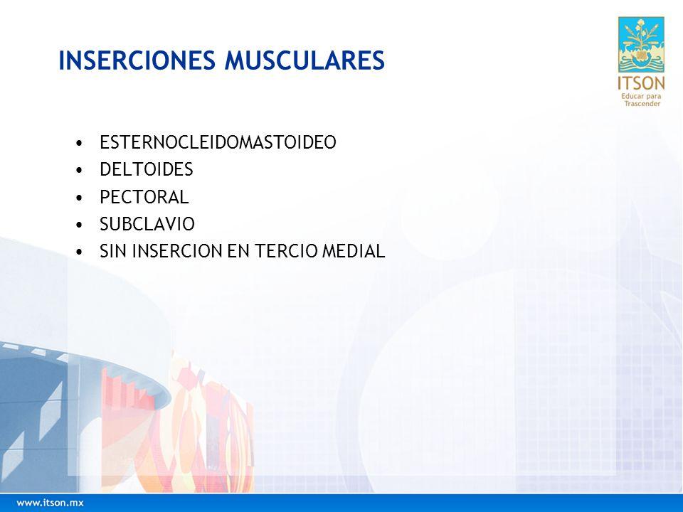 INSERCIONES MUSCULARES ESTERNOCLEIDOMASTOIDEO DELTOIDES PECTORAL SUBCLAVIO SIN INSERCION EN TERCIO MEDIAL