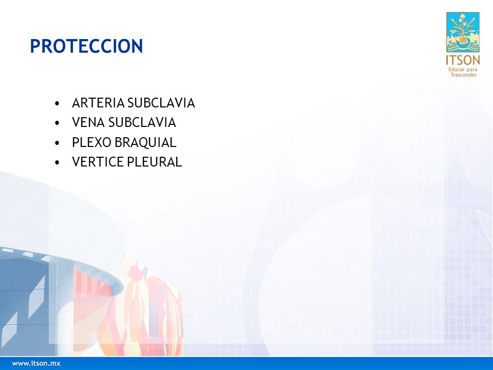 PROTECCION ARTERIA SUBCLAVIA VENA SUBCLAVIA PLEXO BRAQUIAL VERTICE PLEURAL