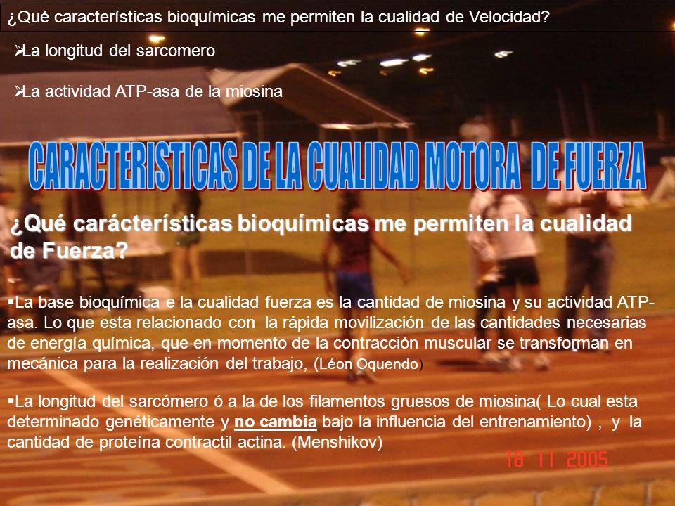 ¿Qué características bioquímicas me permiten la cualidad de Velocidad? La longitud del sarcomero La actividad ATP-asa de la miosina La base bioquímica