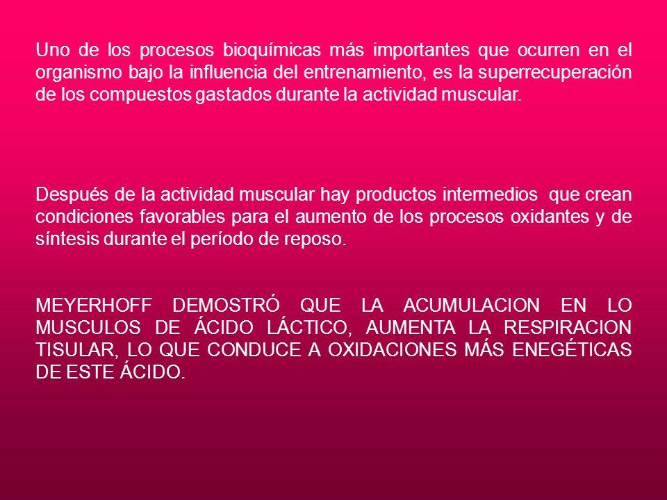 Uno de los procesos bioquímicas más importantes que ocurren en el organismo bajo la influencia del entrenamiento, es la superrecuperación de los compu