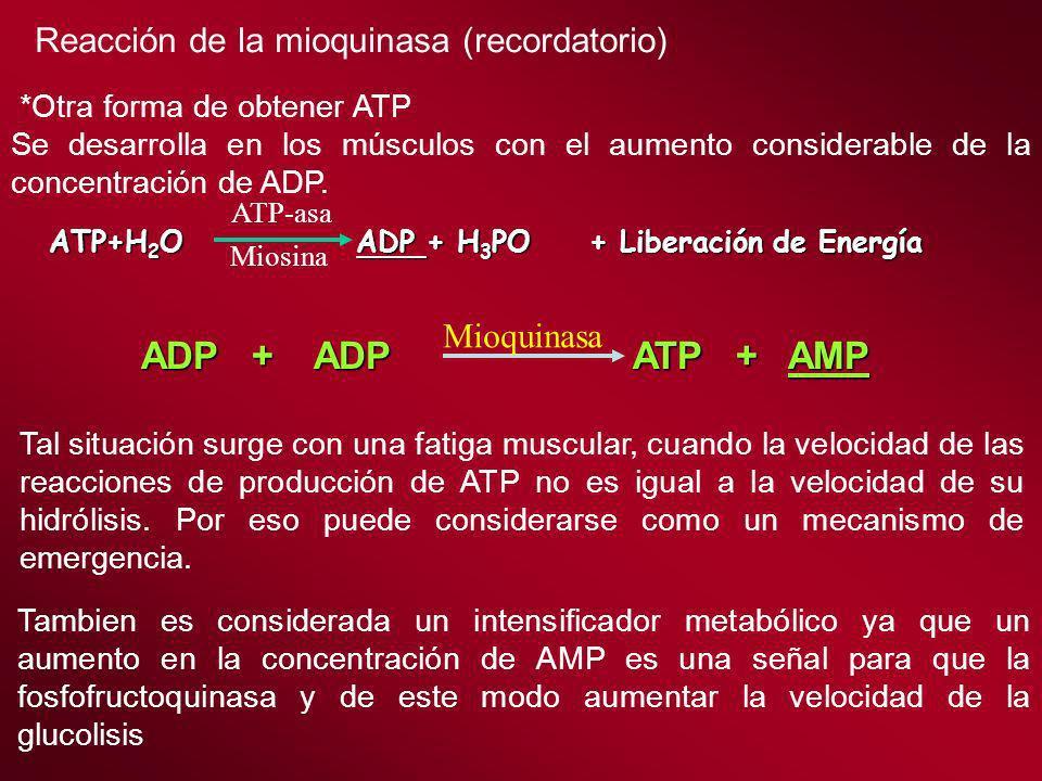 *Otra forma de obtener ATP Se desarrolla en los músculos con el aumento considerable de la concentración de ADP. Reacción de la mioquinasa (recordator