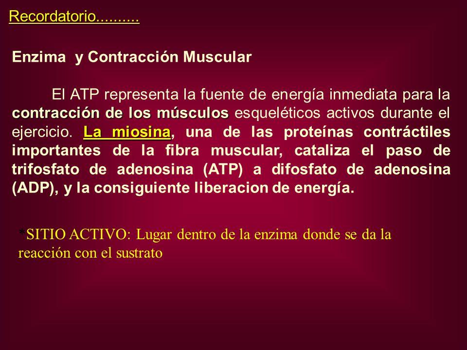 Enzima y Contracción Muscular contracción de los músculos La miosina El ATP representa la fuente de energía inmediata para la contracción de los múscu