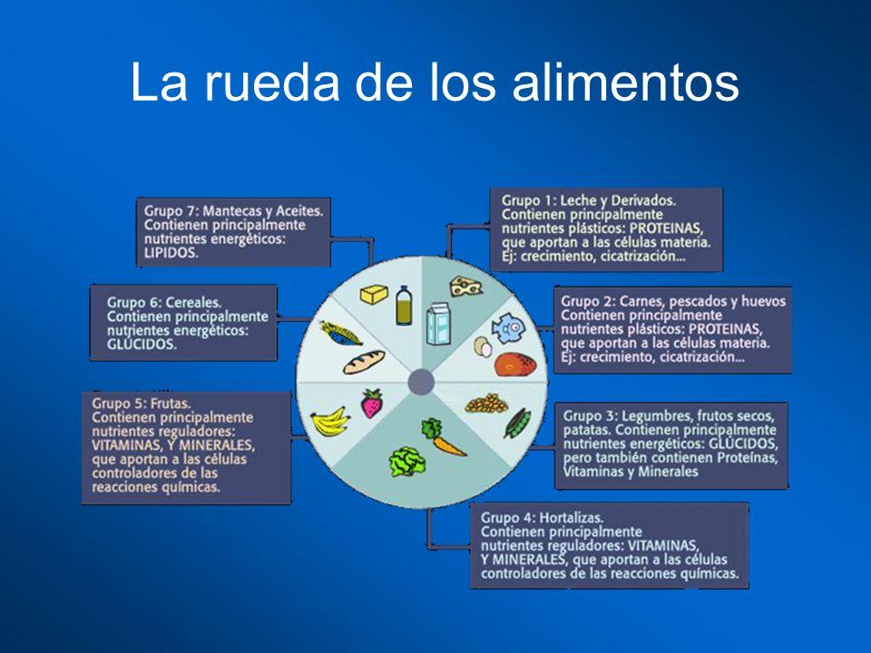 La rueda de los alimentos