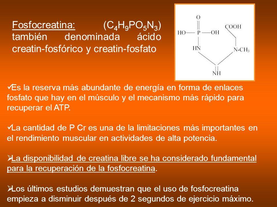 Fosfocreatina: (C 4 H 9 PO 5 N 3 ) también denominada ácido creatin-fosfórico y creatin-fosfato Es la reserva más abundante de energía en forma de enl