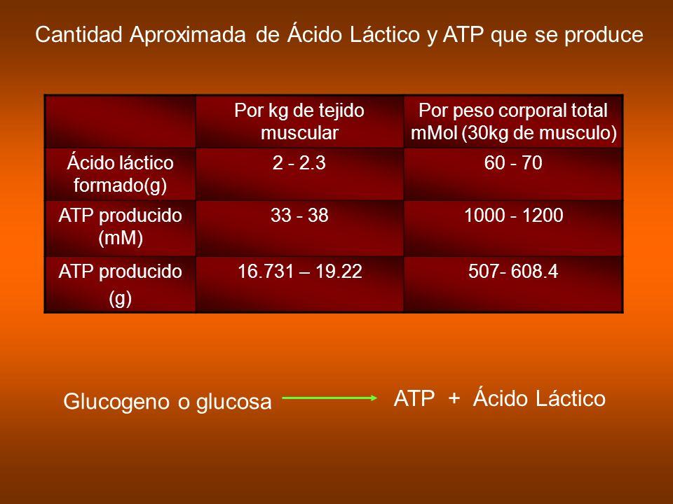 Cantidad Aproximada de Ácido Láctico y ATP que se produce Por kg de tejido muscular Por peso corporal total mMol (30kg de musculo) Ácido láctico forma