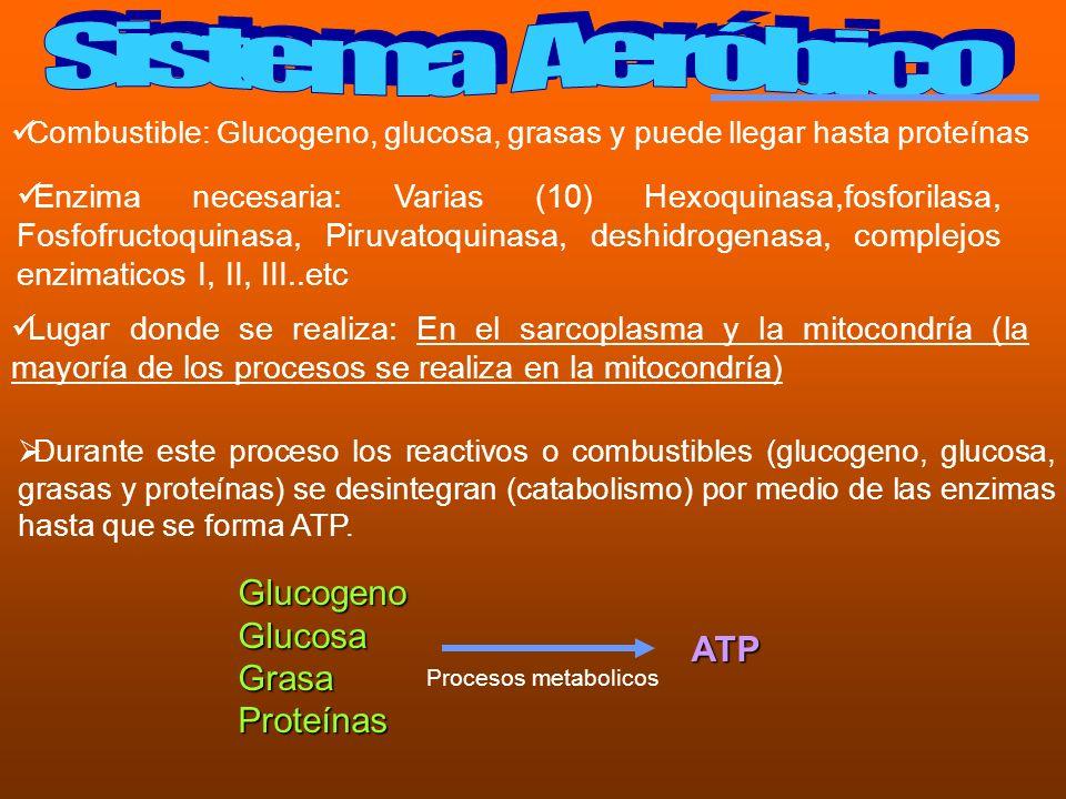Combustible: Glucogeno, glucosa, grasas y puede llegar hasta proteínas Enzima necesaria: Varias (10) Hexoquinasa,fosforilasa, Fosfofructoquinasa, Piru