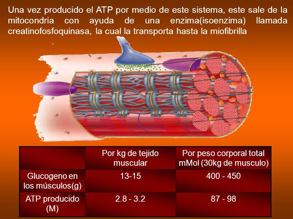 Una vez producido el ATP por medio de este sistema, este sale de la mitocondria con ayuda de una enzima(isoenzima) llamada creatinofosfoquinasa, la cu